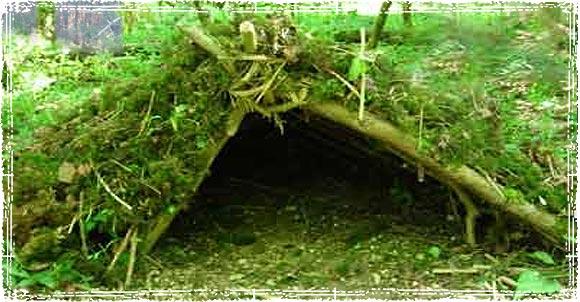 Aframe Debris Hut