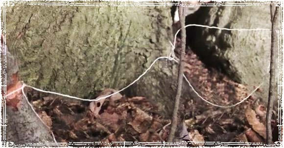 Simple Snare placed on a game trail