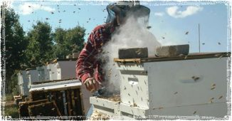 Beekeeper working with Bee Hives