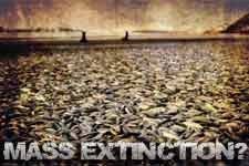mass extinction of fish