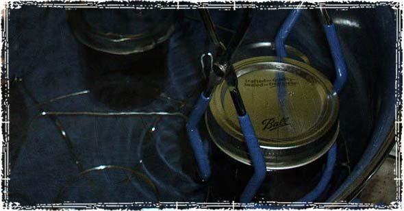 Placing Canning Jars in Boiling Water