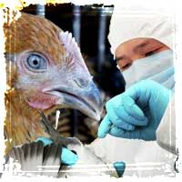 Could China's H7N9 Bird Flu Cause a Global Pandemic