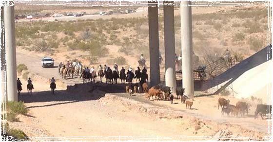 Mounted Cowboys return confiscated cattle