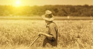 Old Guy in Farm Field