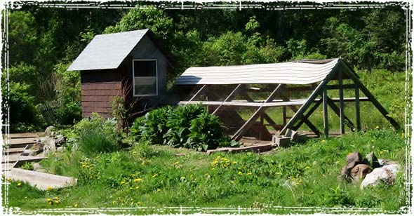 Garden and Chicken Coup
