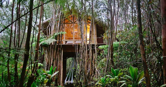 Hawaii Tree House