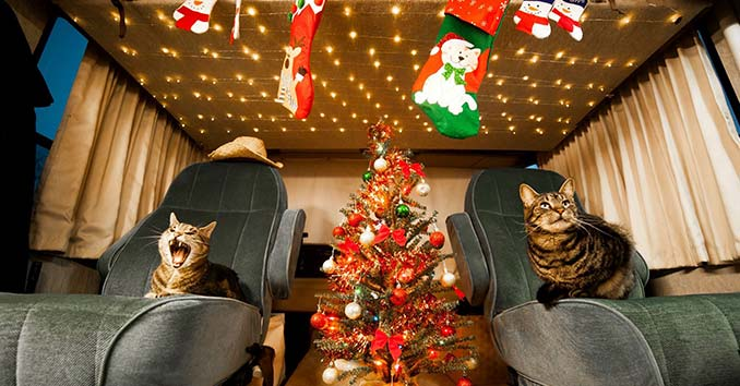 Cats inside an RV