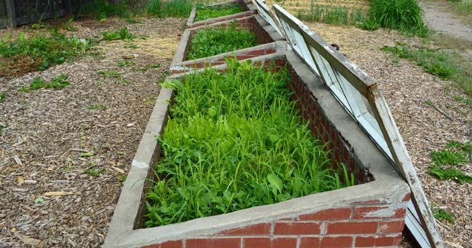 A Cold Frame garden built from Brick and Window panes