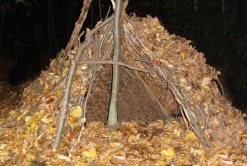 Insulating a shelter with leaves