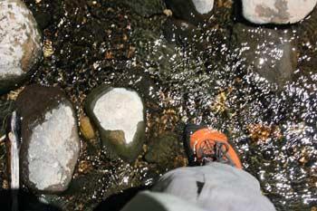 Teva Waterproof Shoes