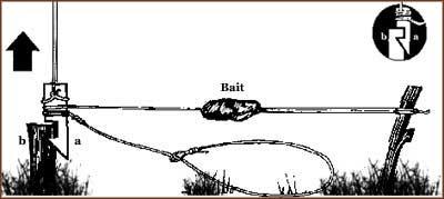 baited snare